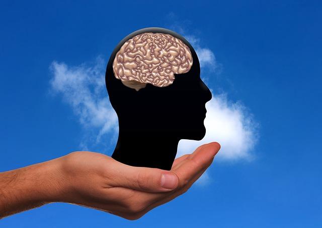 脳の基本的な構造