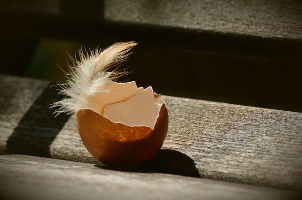 枯死卵の原因